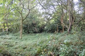 Land at Congleton Road 1